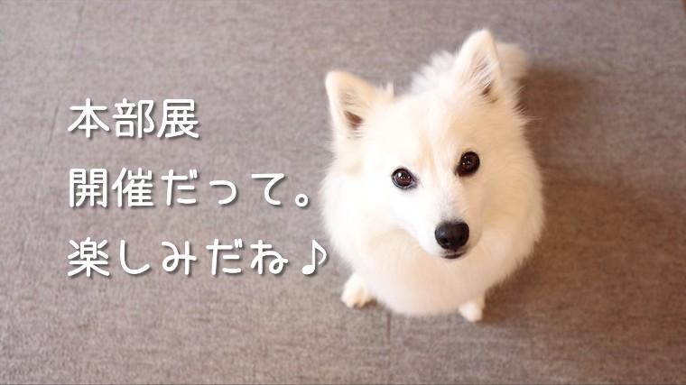 日本スピッツ協会の本部展(2020年秋季展)が開催されるそうです。ちぃ ...